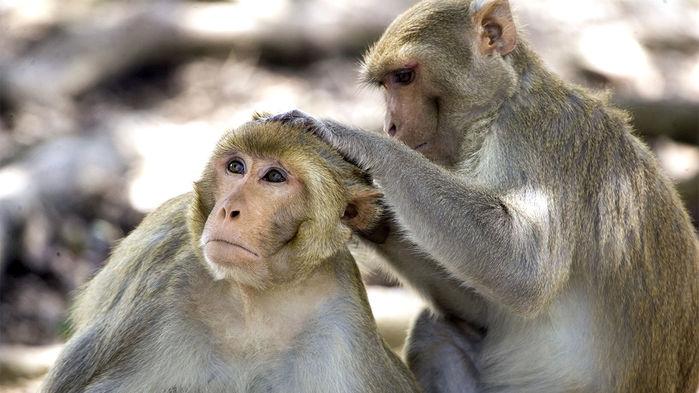 monkey_16x9